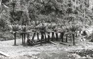 Fern Tree Bower