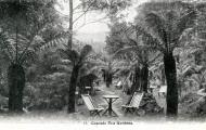 Cascade tea gardens. Postcard from our collection.