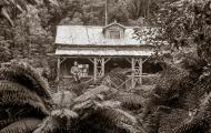 Cluster Grove Hut