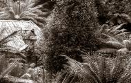 Fern Retreat hut