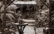 Grass Tree Hut