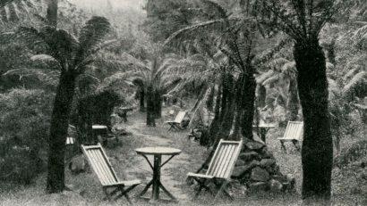 Cascade Tea Gardens